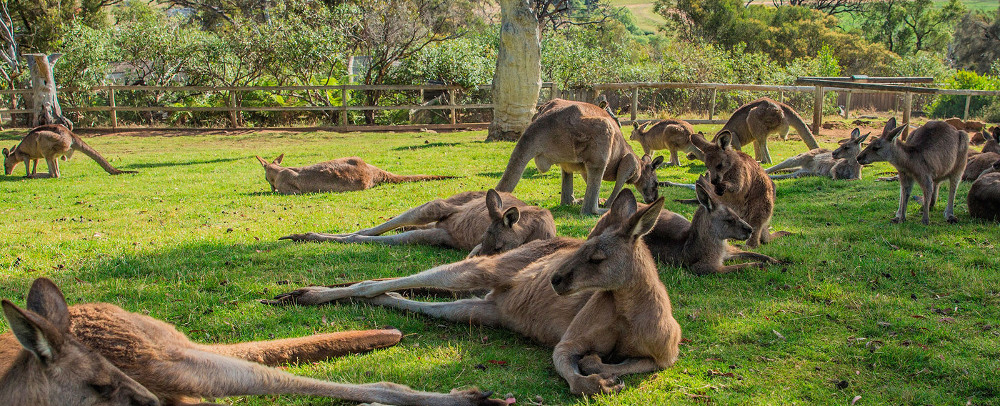 Bonorong Wildlife Sanctuary, Australia @Gift It Now