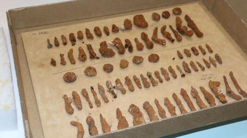 Sorted Port Arthur convict artefacts, Australia @ABC