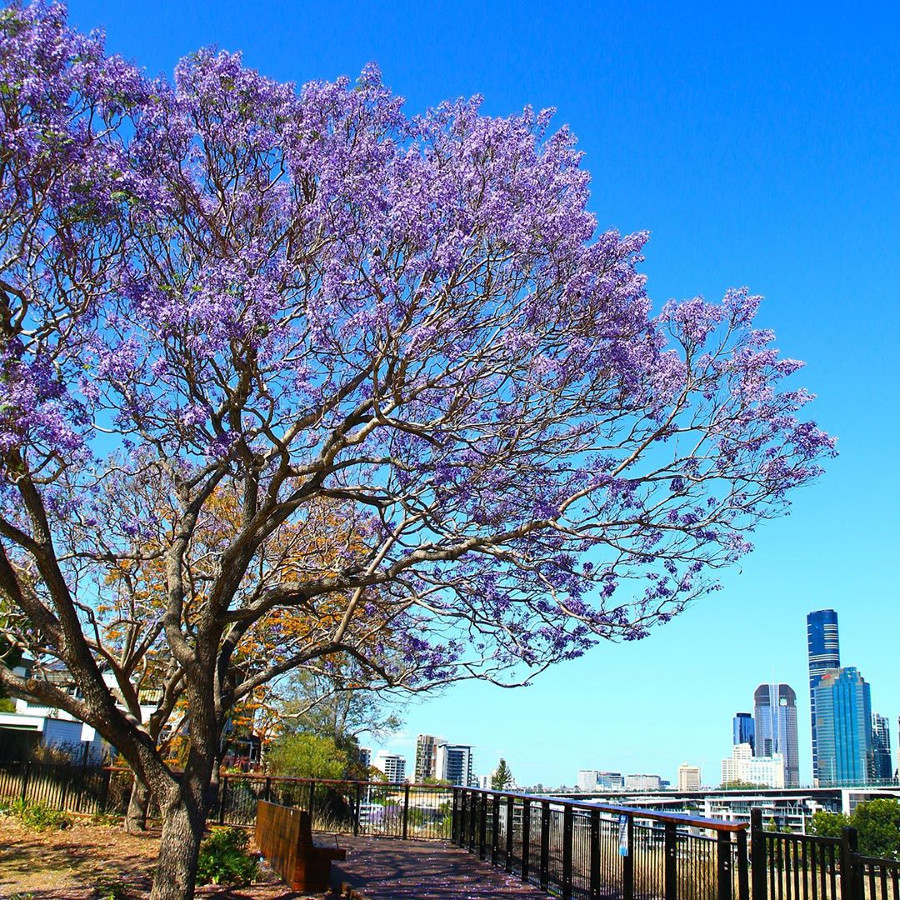 Brisbane, Australia @omlandlanded