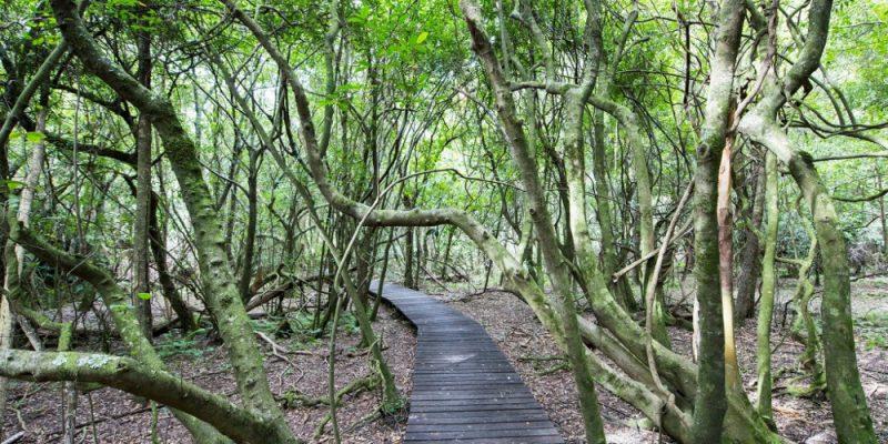 FernTree Gully, Mudgee, Australia @VisitNSW