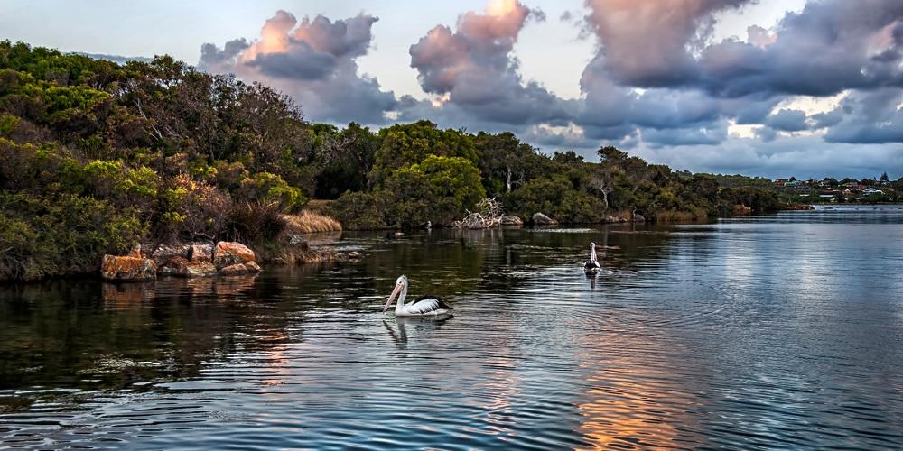 Augusta Pelicans,Margaret River Region, Australia @Scoop