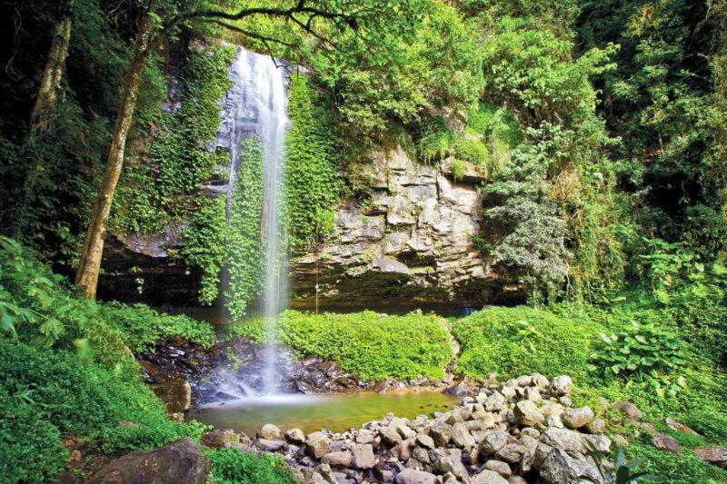 Crystal Shower Falls, Dorrigo National Park