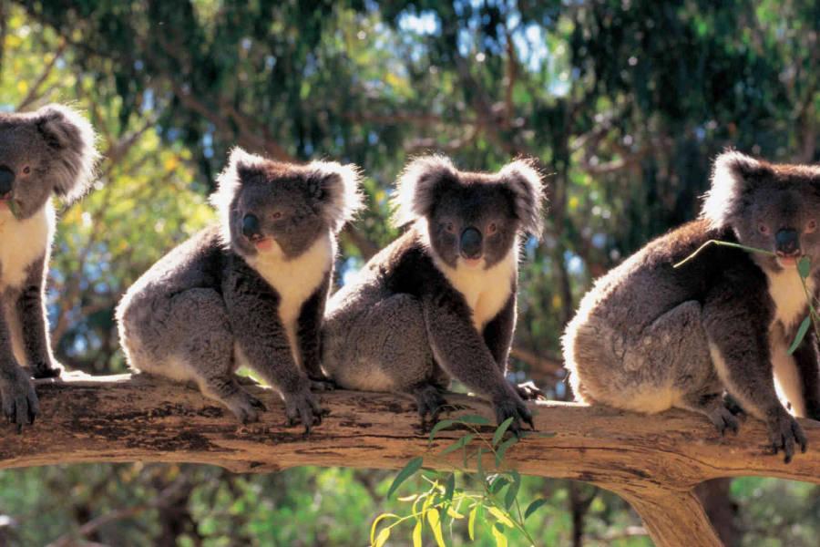 Cleland Wildlife Park,Australia @Adelaide Sightseeing