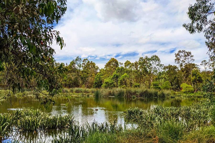 Laratinga Wetlands,Australia @dani.kriegs