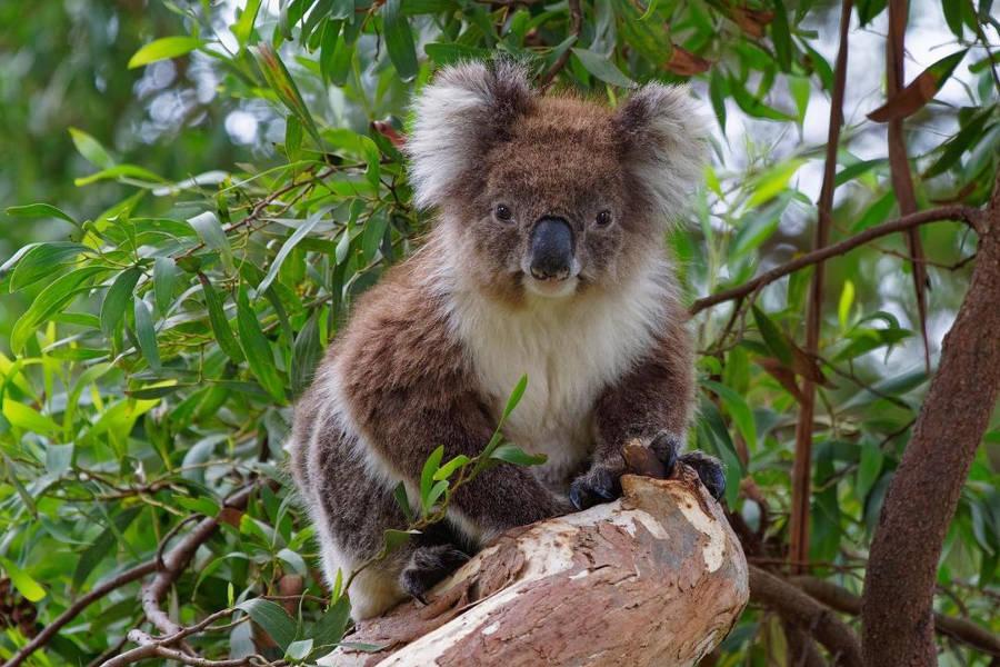 Tower Hill Reserve, Warrnambool,Australia @rick_viola